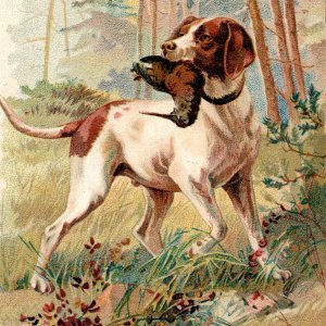 1889 Hunting Bird Dog With Woodcock Arbuckles Ariosa Coffee Victorian Trade Card