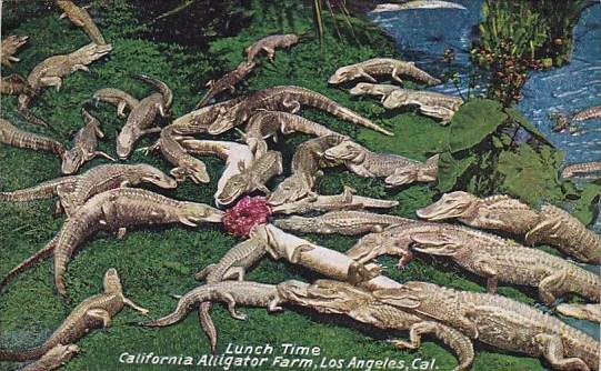 Lunch Time California Alligator Farm Los Angeles California