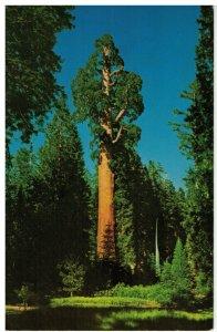 Postcard - General Grant Nation's Christmas Tree Kings Canyon National Park, Ca.