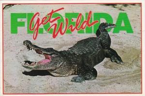 Florida Alligator Get Wild 1996