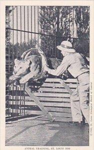 Animal Training Saint Louis Zoo Saint Louis Missouri