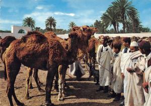 B95715 libya cattle market mercato bestiame africa