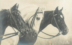 Horses early photo postcard