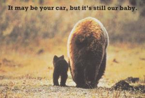 Your Car Is Our Baby MOT Cat With Giant Animal Advert Postcard