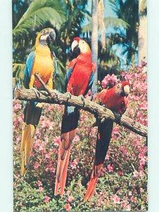 Pre-1980 SUNKEN GARDENS SCENE St. Petersburg Florida FL AF9138