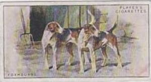 Player Vintage Cigarette Card Dogs No 15 Foxhounds