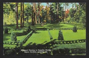 Boxwood Planting Camellia Garden Bayou Gardens Lacombe Louisiana Unused c1950