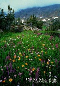Wildflowers Rocky Mountain National Park Colorado