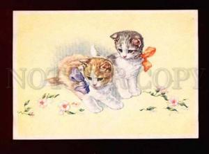 001199 Two Cute  KITTENS. Old color card