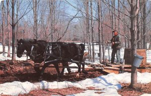 Maple Sugar Time in Vermont Photographer Frank. L Forward 1988