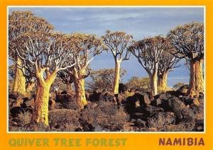 Namibia Quiver Tree Forest Southern Namibia