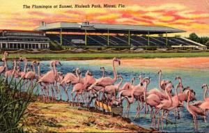Birds Flamingos At Sunset At Hialeah Race Track Miami Florida 1951 Curteich