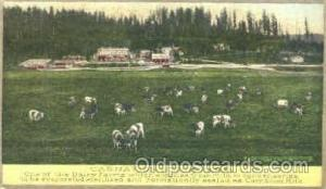 Carnation Stock Farm, Advertising Postcard Post Card Unused