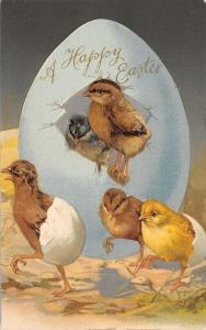 Easter~Multi-Color Chicks Call Blue Egg Home~Hatch From Shell~Glossy Emboss~1905