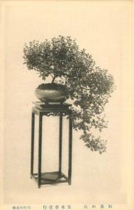 Bonsai Tree Horticulture Furniture Interior Design View #2 C-1910 JAPAN 3360