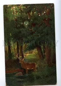 170353 Summer HUNT Deer by SAMBO vintage Colorful PC