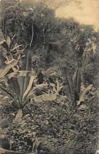 German East Africa, D.O. Afrika Tanzania Urwald in Malila, Postkarte, Postcard