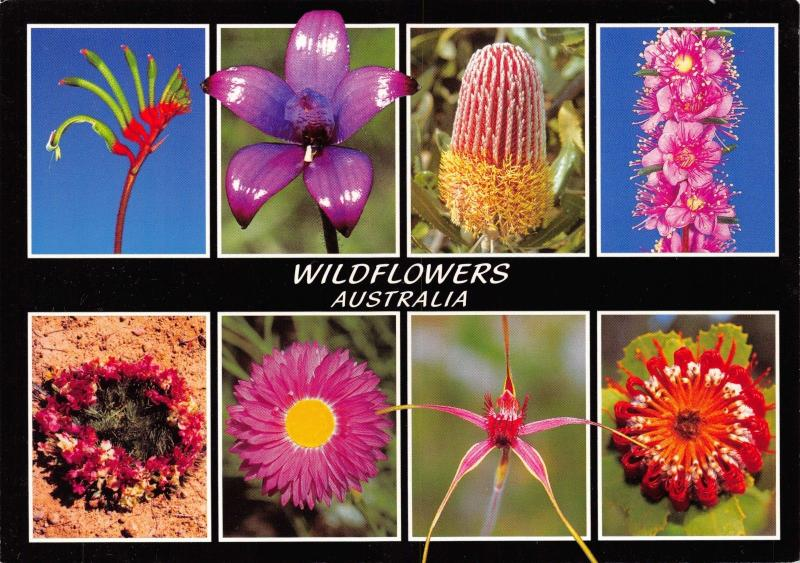 Postcard Wildflowers Australia Multiview Photo's by Annette Kent #313