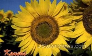 Sunflower Misc KS Unused