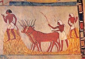 Egypt Menna Tomb Harvest Scene, Tombeau de Menna Scene de Recolte