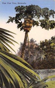Paw Paw Tree Bermuda Island Unused