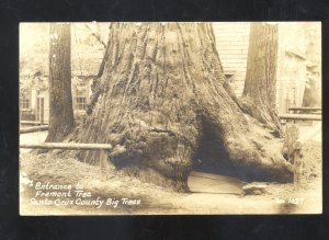 RPPC SANTA CRUZ COUNTY CALIFORNIA DRIVE THRU TREE VINTAGE REAL PHOTO POSTCARD