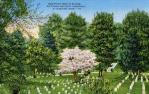 MS - Vicksburg. Vicksburg National Military Park, Dogwood Tree in Bloom