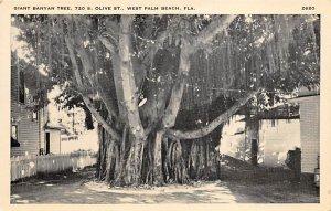 Giant Banyan Tree  Palm Beach FL