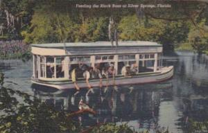 Florida Silver Springs Feeding The Black Bass From Glass Bottom Boat 1953 Cur...