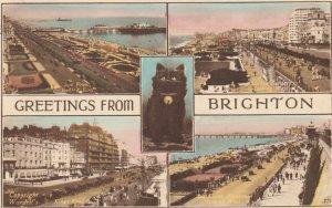 BRIGHTON, Sussex, England, 1944 ; Black cat