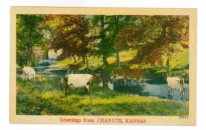 Greetings From Chanute, Kansas unused Linen Postcard,  Cows & Cattle