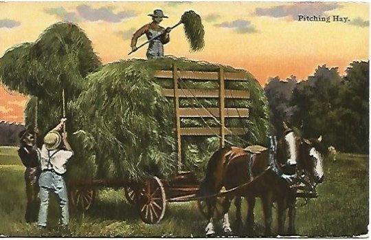 Pitching Hay Horse drawn Hay Wagon Farmers Sunset Vintage Postcard