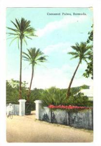 Cocoanut Palms, Bermuda, PU-1938