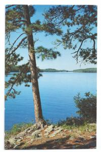 Norway Pines Sentinels of the Lake Country Michigan 1972