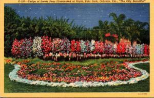 Florida Orlando Hedge Of Sweet Peas Illuminated At Night Eola Park Curteich