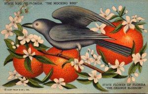 Florida State Bird The Mocking Bird Curteich