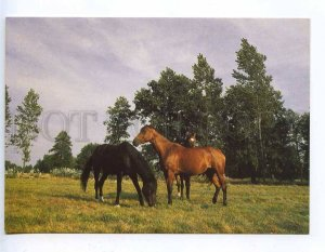 218653 POLAND HORSES old photo postcard