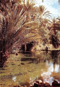 Morocco Tinerhir, The Sacred Fish Spring, La Source des Poissons Sacres