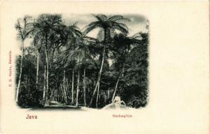 CPA JAVA Sindanglaja INDONESIA (565941)