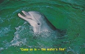 Dolphin, Come On In - The Water's Fine, Florida, 1982