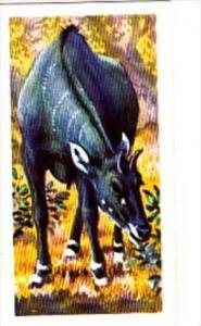 Brooke Bond Trade Card Asian Wildlife No 35 Nilgai