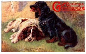 Dog , Spaniels , Christmas Greetings