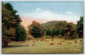 San Francisco California~Golden Gate Park~Elk Paddock~Elk Grazing~1924 Postcard