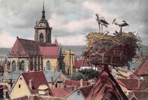 Belgium Cigognes d'Alsace, Colmar Nid de Cigognes avec vue sur la Cathedrale