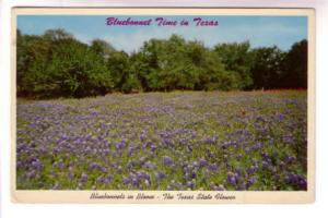 Bluebonnet Flower Time in Texas, Offical State Flower Seal