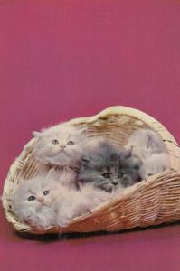Basket Full Of Siamese Kittens Postcard