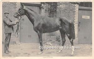 Solicitor Famous Horse Horse Racing 1903