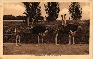 CPA AK MARRAKECH Parc aux Autruches MAROC (688645)