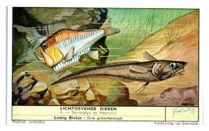 Sternoptyx and Macrourus Fishes, Luminous Animals Liebig Belgian Trade Card