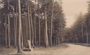 Maine Eustis Cathedral Pines Real Photo RPPC
